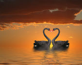 Two Swans at Sunset — Stock Photo