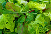 Mixed Salad Greens — Stock Photo