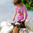The little girl feeds rabbits -  