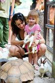 The little girl feeds rabbits — Stock Photo
