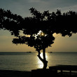 SILHOUETTE OF THE TREE — Stock Photo