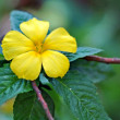 Yellow tropical flower — Stock Photo