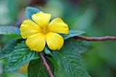 Yellow tropical flower — Stock Photo
