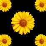 Flowers background 2 — Stock Photo