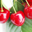 Cherries 4 — Stock Photo #2244979