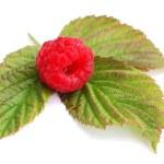 Raspberry 1 — Stock Photo
