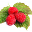 Raspberry 6 — Stock Photo