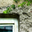 Window and ivy — Stock Photo