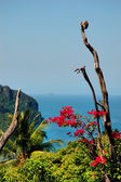 View of the island of Phi Phi, Thailand — Stock Photo