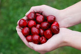 Cherries and hand — Stock Photo