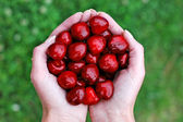 Cherries and hand 1 — Stock Photo