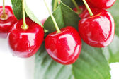 Cherries 4 — Stock Photo