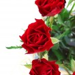 Red roses detail 2 — Stock Photo