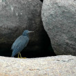 Stock Photo: Heron 2