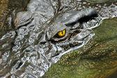 Crocodile eye — Stock Photo
