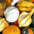 Stock Photo: Pumpkins 1