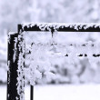 Frost — Stock Photo #2283024