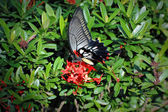Papillon 2 — Photo