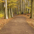 Stock Photo: Trail in forest