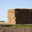 Haystack on the field — Stock Photo #2231311