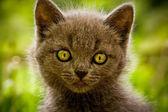 子猫αγίου Βαλεντίνου γατάκι — ストック写真