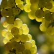 Stock Photo: Wine white grape