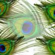 Detail of peacock feather eye — Stock Photo