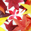 Autumn leaves — Stock Photo #2285587