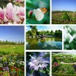 Flowers and gardens — Stock Photo