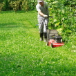 Stock Photo: Gardening - cutting the grass