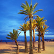 Empty beach with palm by night - Stock Photo