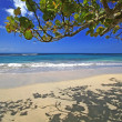 CaribbeBeach Scene — Stock Photo #2455019