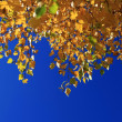 Autumn Leaves against Blue Sky — Stock Photo