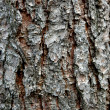 Pine Bark — Stock Photo #2459688