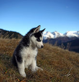 Puppy Dog in front of a Mountain Scenery — Стоковое фото
