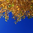 Autumn Leaves against Blue Sky — Stock Photo #2465304
