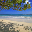 Stock Photo: CaribbeBeach Scene