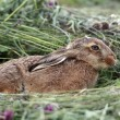 Young rabbit in the grass - Stock Photo