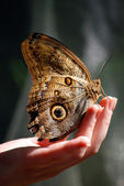 Beautiful butterfly sitting on a hand — Stock Photo
