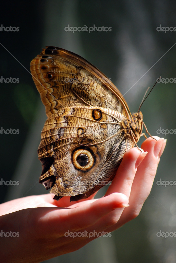 Hand cradles a butterfly. Care and protection concept. — Stock Photo #2533782