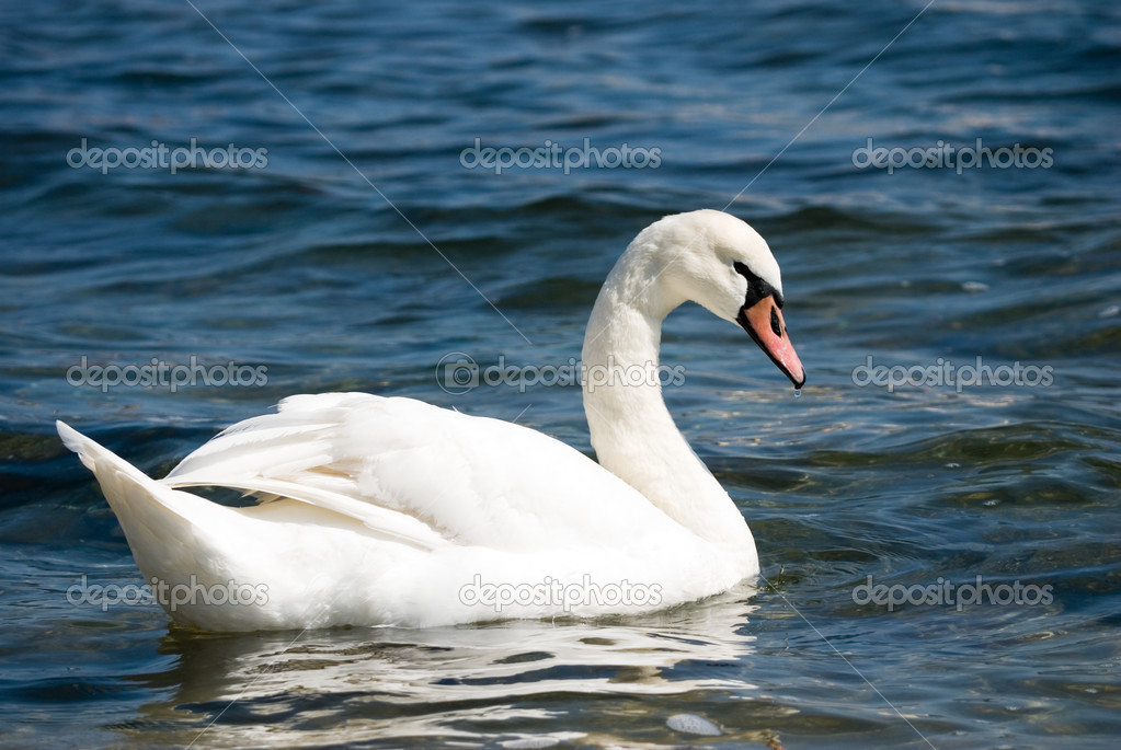 Graceful white bird on a water. — Stock Photo #2547803