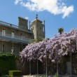 Old palace yard and violet blossom - Stock Photo