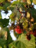örümcek — Stok fotoğraf