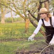 Stock Photo: Young womcleaning tree limbs