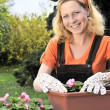 Woman planting flowers - Foto Stock