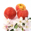 Stock Photo: Apples and apple-tree blossoms