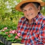 Senior woman - gardening — Stock Photo #2264527