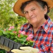 Senior woman - gardening - Foto Stock