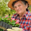 Senior woman - gardening - Photo