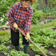 Stock Photo: Senior womgardening